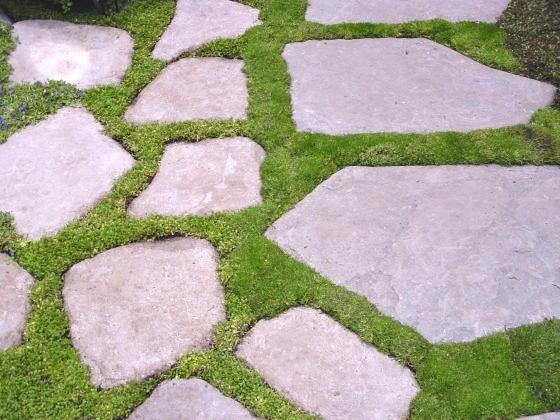 Landscaping With Irish Moss : Sagina subulata irish moss s e c r t g a d n