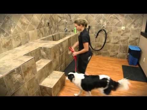 Dog Wash | Pet Articles | Pet Valu Pet Store | Pet food, Treats and Supplies
