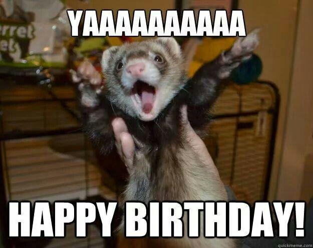 Днем рождения, открытки с хорьками с днем рождения