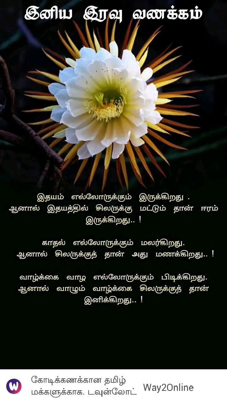 Pin By Lavanya On A Tamil Quotes In 2020 Dandelion Plants Flowers