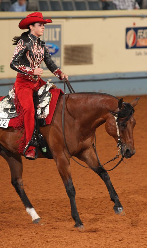 Harley D Zip....AQHA living history    Not sure who this is but I figured it was on pinterest so I assumed you'd enjoy it.