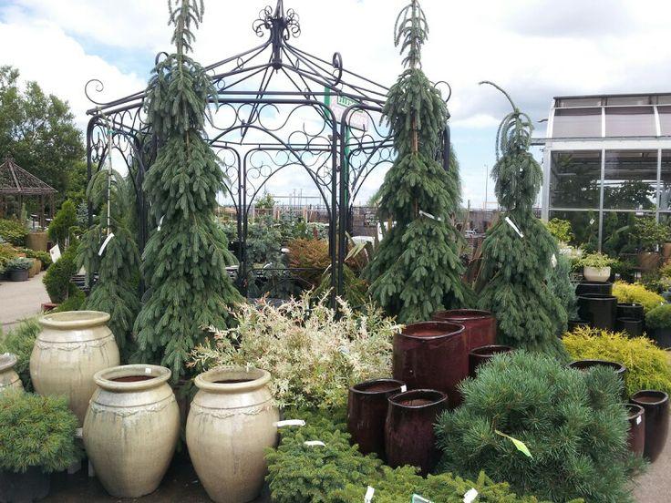 Pot display in courtyard; summer 2013