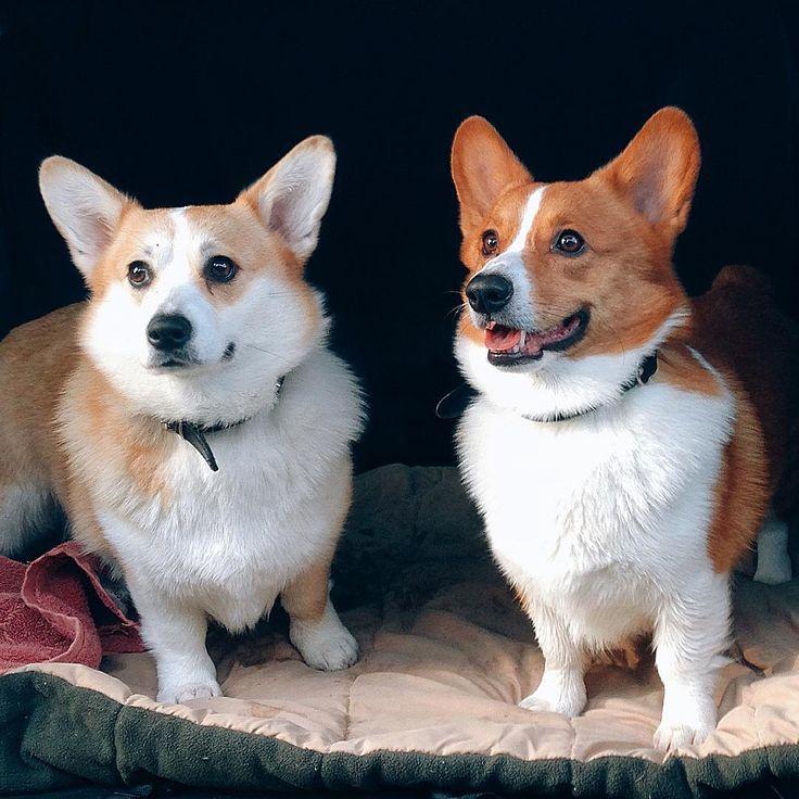 나의 평생 친구 찰스,리나 사랑해❤#corgi#corgistagram#welshcorgi#friends#instacorgi#dogstagram#love#doggy#コーギー#코기#웰시코기#개스타그램#멍스타그램#강아지#일상#사랑해#반려견#daily#친구#코기스타그램#instadog#vancouverdogs