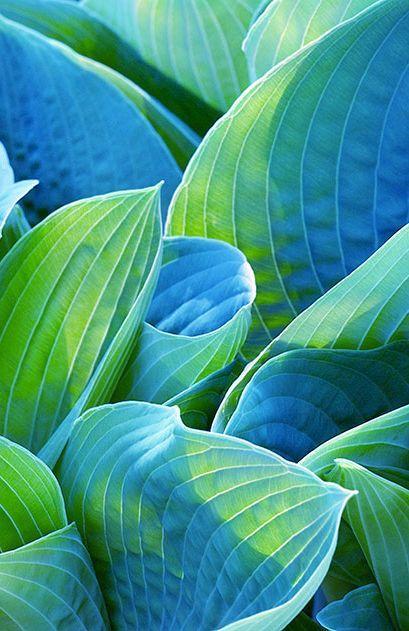 Blue And Green Living Room Ideas: Tinamotta: Via Carlosenzpondal