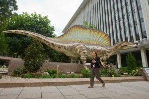 El Universal 140911 - Ciencia - Spinosaurus aegyptiacus, el primer dinosaurio semiacuático