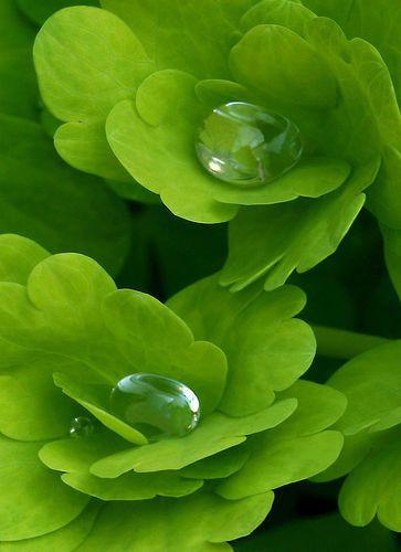 Couleur secondaire : Vert ( Jaune primaire + Cyan)