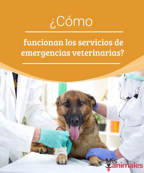 ¿Cómo funcionan los servicios de emergencias veterinarias?   ¿Te has parado a pensar alguna vez cómo funcionan los servicios de emergencias veterinarias? Aquí te contamos todos los detalles. #función #servicios #veterinarios #salud