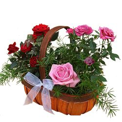 A complimentary coloured basket including pink roses contains a mix of seasonal flowers and fresh foliage.