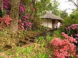 Hogsback spring (azaleas)