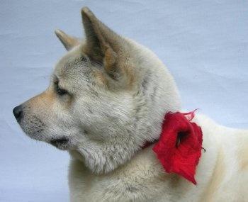 boya with red flower  Neuchi Nakama Vilt    Mirjam Peeters