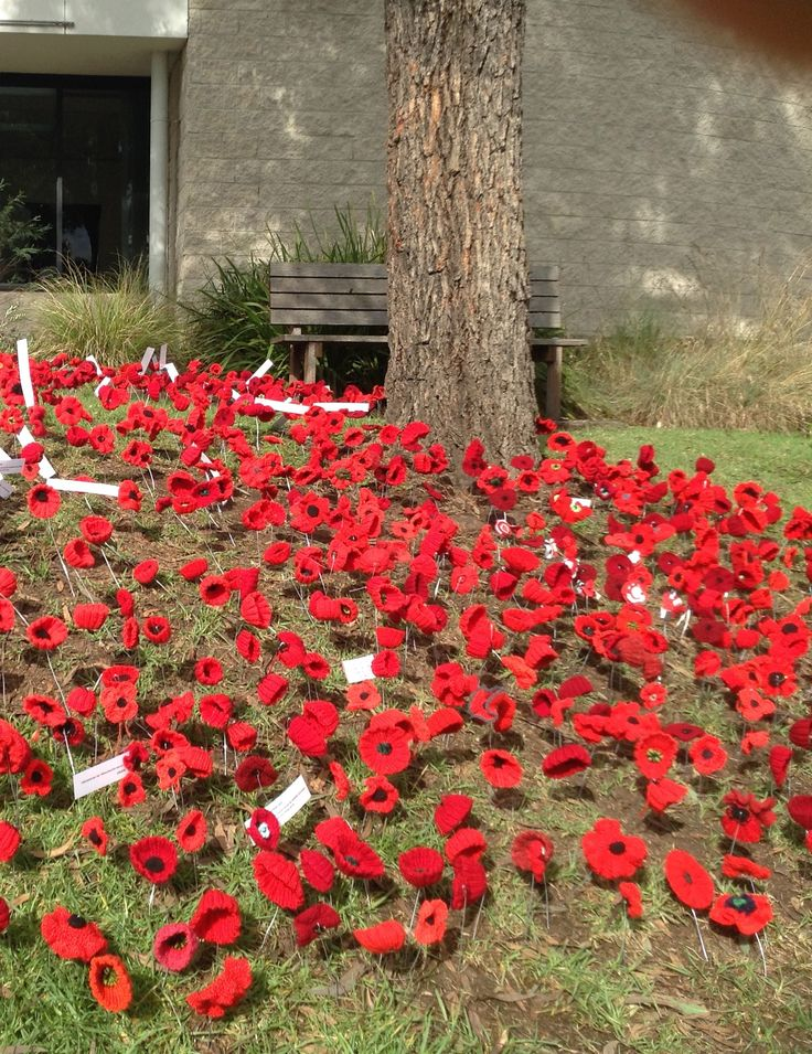 Poppies outside Bega library - volunteer co-creators and planters. Some poppies include dedications. A wonderful community tribute for Anzac Day 2015.