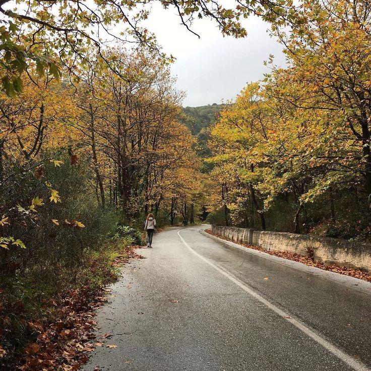 #Milies #Vyzitsa #walking #Pelion #autumn #colors and #leaves #sobeautiful #instagreece #Greece #travel #instatravel #nofilter