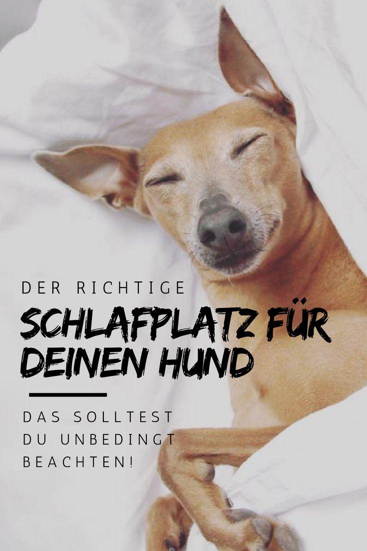 Der richtige Schlafplatz für Deinen Hund - DAS solltest Du unbedingt beachten!