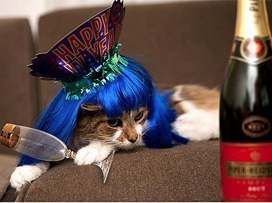 Night of, or morning after? This party cat looks ready for another – or ready for bed.