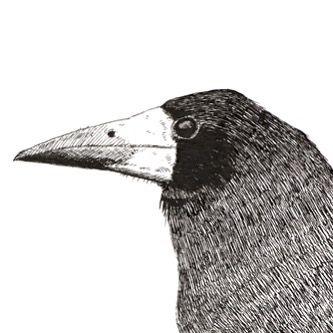 Rook Pen & Ink by Ben Farnell  http://ift.tt/2AgNjvo  http://ift.tt/2zXy6Mx  #birdartben #penandink #rook #etsy #birds #birdart
