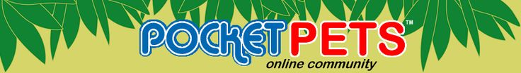 Sugar Bears Breeders - Pocket Size Pets for Sale