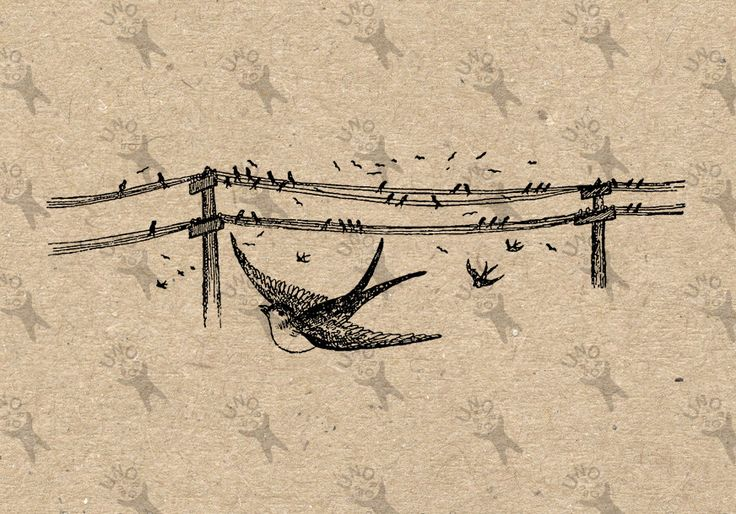 Vintage Flying Birds Swallow Sparrow martlet image Instant Download picture Digital printable clipart graphic burlap fabric transfer 300dpi by UnoPrint on Etsy