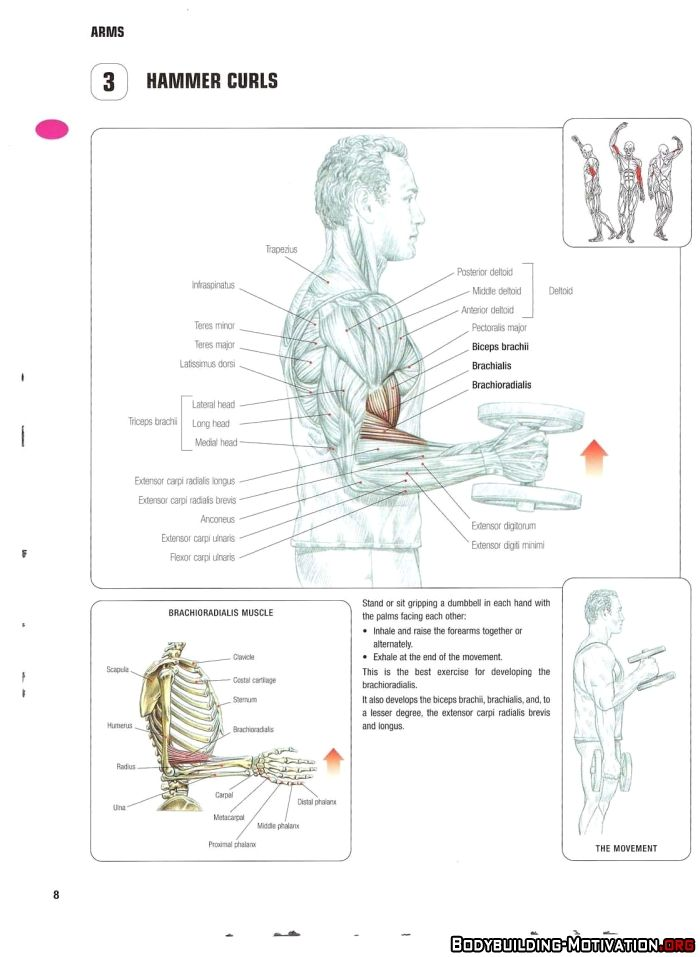 10 best Biceps Exercises images on Pinterest | Fitness exercises ...