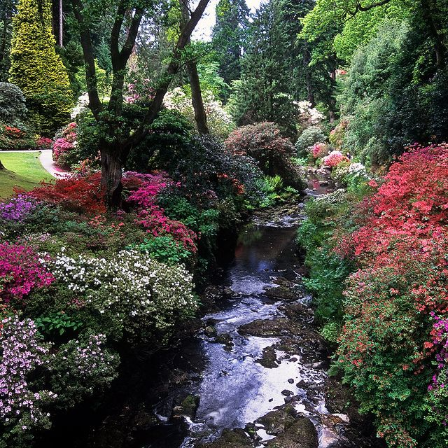 Bodnant Gardens, Conwy, Wales, UK | River banks covered in kaleidoscopic colors of azaleas (15 of 15) by ukgardenphotos, via Flickr   ..rh