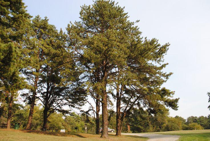 MichiganWhite Pine Hindu Dating