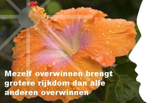 Mijn inspiratie: Mezelf overwinnen brengt grotere rijkdom dan alle anderen overwinnen