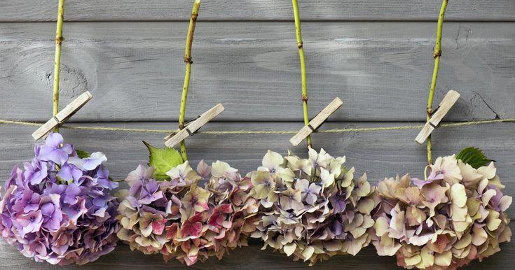 Hortensien trocken: 4 Tipps zur Erhaltung der Blumen – Garten – # Blumen # …   – Brautstrauß