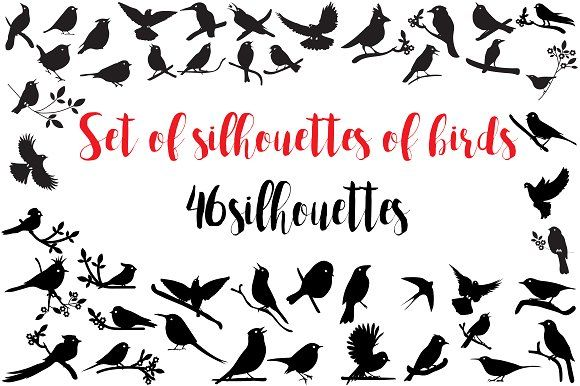 Silhouettes of  birds by Orangepencil on @creativemarket