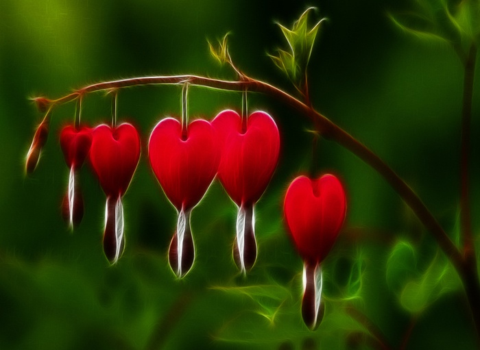 Red Bleeding Heart Flower Tattoos Pinterest