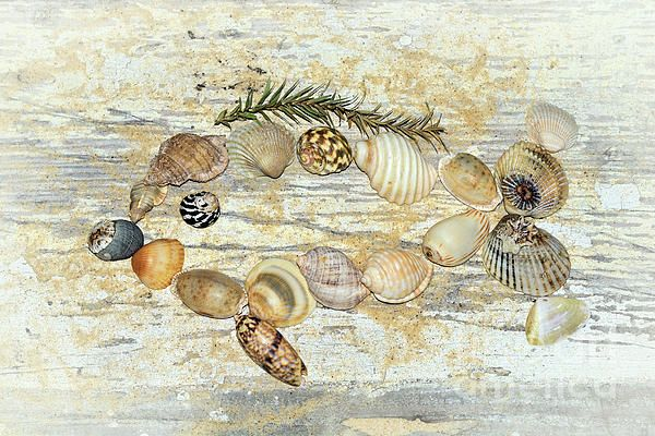 I created 'Shell Fish' from some #seashells I placed in the shape of a #fish on a grungy board background with a touch of #sand. #Shell #Fish by #Kaye_Menner #Photography Quality Prints Cards Products with a money-back guarantee at: https://kaye-menner.pixels.com/featured/shell-fish-by-kaye-menner-kaye-menner.html