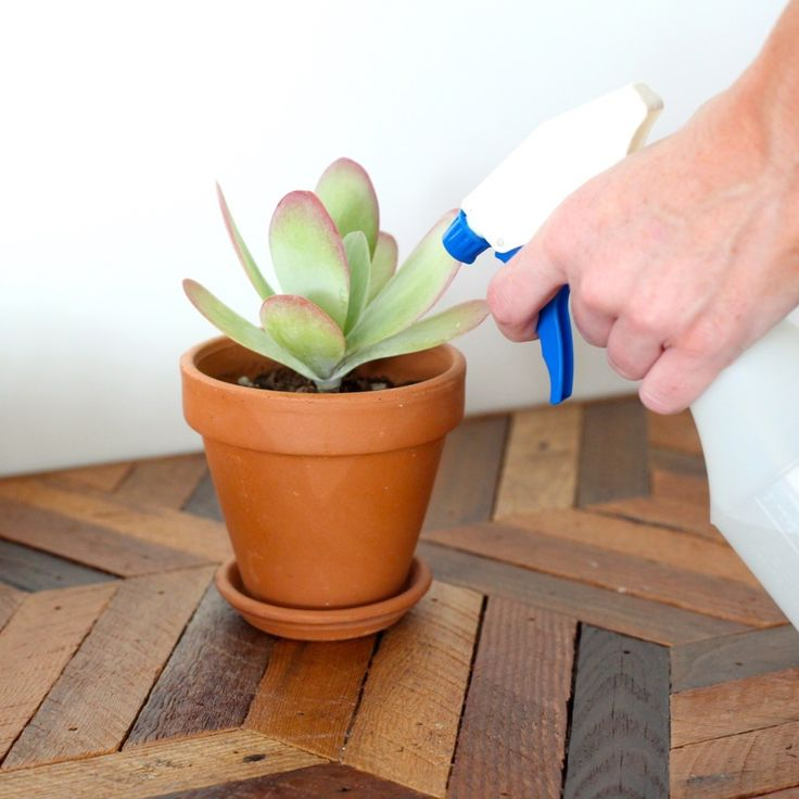 How to water succulents. #leafandclay #succulents