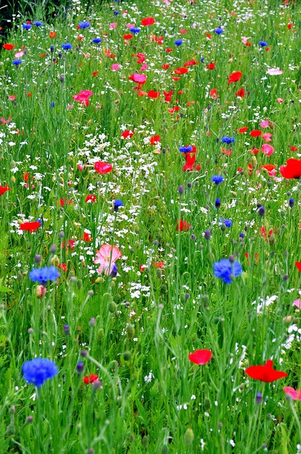 Finding cloud-shapes on a bed of wild flowers... ;)