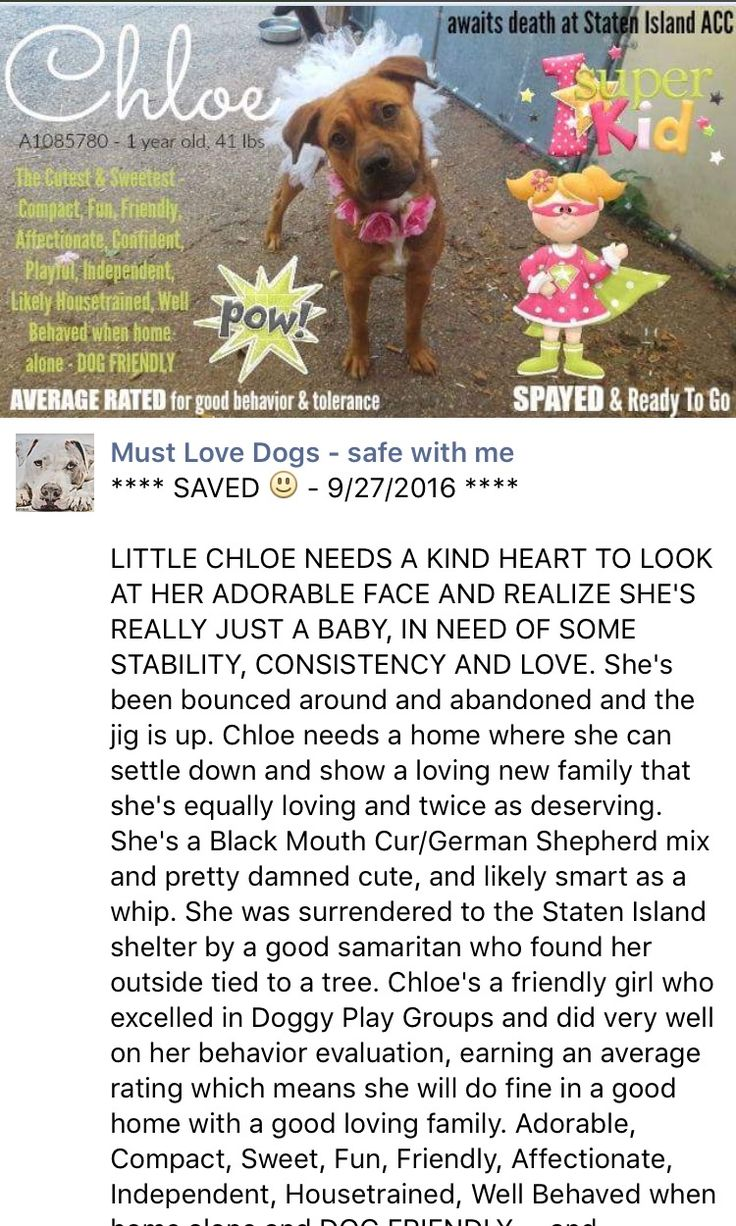 RETURNED AGAIN 10/10/16 TOO HYPER!!! POOR SWEETHEART !!! SUPER URGENT Staten Island SAFE 9/27/16 PLEASE LOVE AND KEEP HER FOREVER❤️❤️❤️ RETURN 09/24/2016 TOO HYPER --- SAFE 08/2016 --- Staten Island Center My name is CHLOE. My Animal ID # is A1085780. I am a spayed female brown and black black mouth cur and germ shepherd mix. The shelter thinks I am about 1 YEAR 1 MONTH old. SAFER : AVERAGE HOME FEMALE, BROWN 1 yr STRAY – STRAY WAIT, NO HOLD Reason STRAY Intake condition UNSPECIFIE Intake…