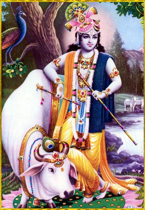 "✨ SHRI KRISHNA GOVINDA ✨ http://careforcows.org/ ""O Brahmana Vyasadeva, it is decided by the learned that the best remedial measure for removing all troubles and miseries is to dedicate one's activities to the service of the Supreme Lord Personality..."