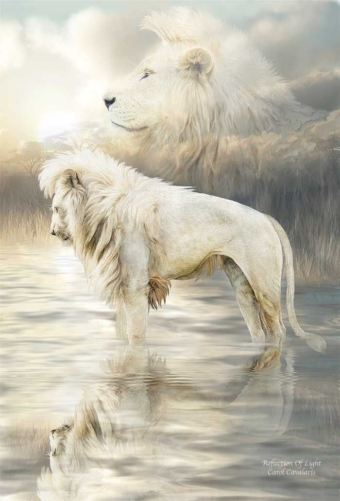 White Lion Reflection By Carol Cavalaris Paintings