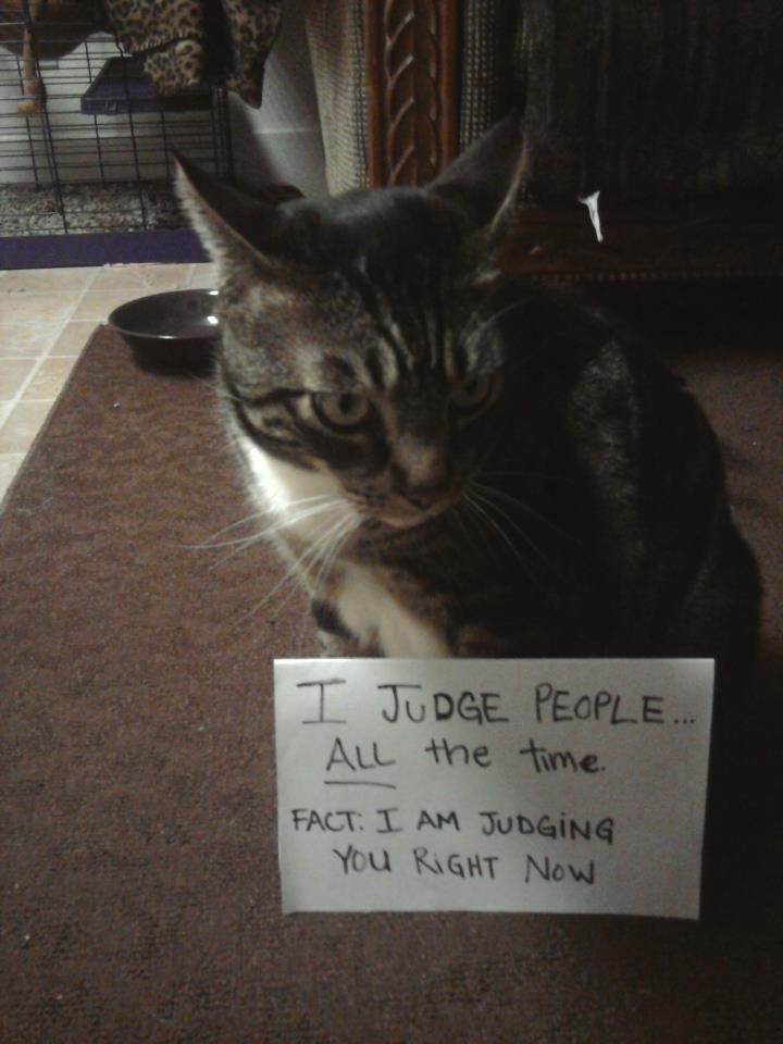 Cat Shit Meme