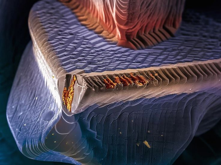 Under a Microscope Even Familiar Things Look Beautifully Weird - Wired Science
