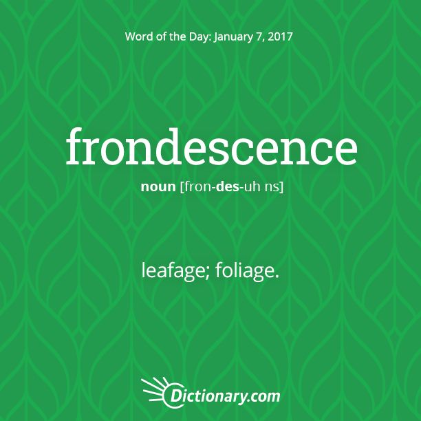 Get the Word of the Day - frondescence | Dictionary.com