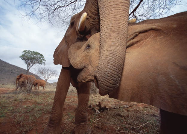 Elephant and calf photo