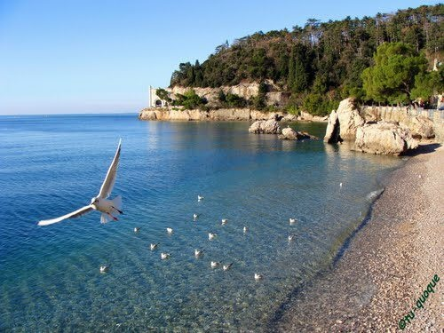 .... and fly away