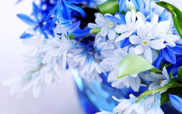 Blue Flower Wallpapers, http://www.firsthdwallpapers.com/blue-flower-wallpapers.html