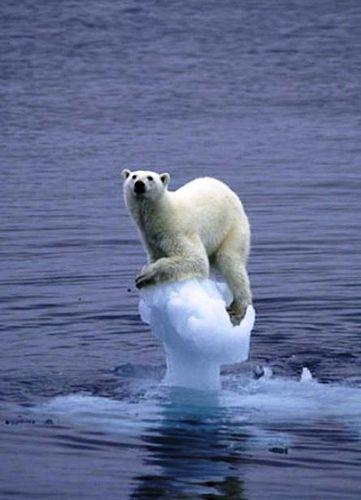 i LOVE polar bears!!