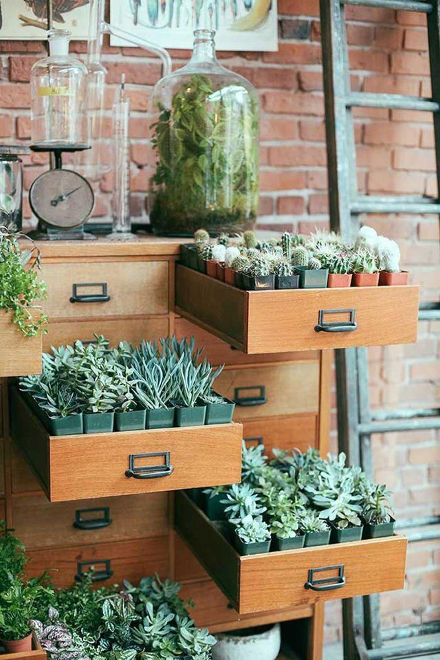 DIY INSPIRATION | File Cabinet Succulent Storage