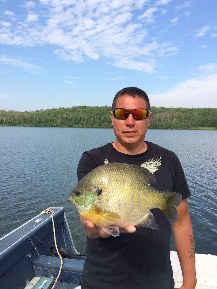 17 best images about bluegill redear warmouth sunfish on for Bluegill fishing tackle