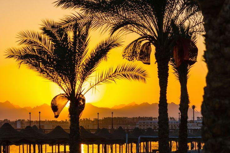 #LastMinute #Schnäppchen:  1 Woche #Hurghada #Ägypten im 5 Sterne Hilton Resort inkl. Halbpension, Flügen und Transfer für nur 261€ ►http://www.urlaubsguru.de/pauschalreisen-angebote/last-minute-aegypten-1-woche-im-5-sterne-hilton-resort-inkl-halbpension-fluegen-und-transfer-fuer-nur-26e/