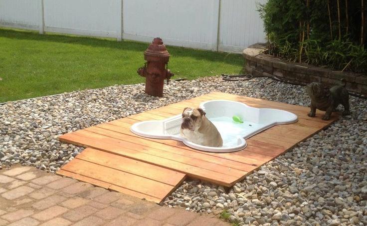 Dog Pool!  Too cute!!