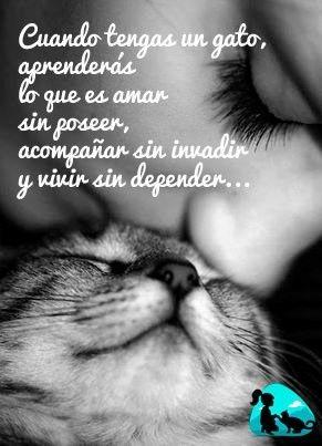 Cuando tengas un gato, aprenderás lo que es amar sin poseer, acompañar sin invadir y vivir sin depender...