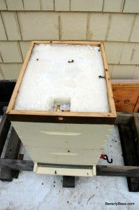 Installing The Candy Board For Winter Feeding