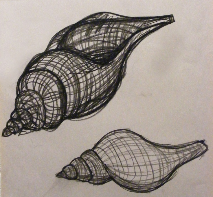 how to draw a shells