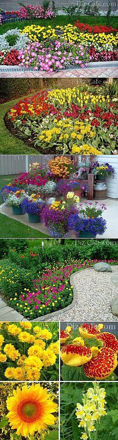 Однолетние цветы для дачи: неприхотливые однолетники цветущие все лето