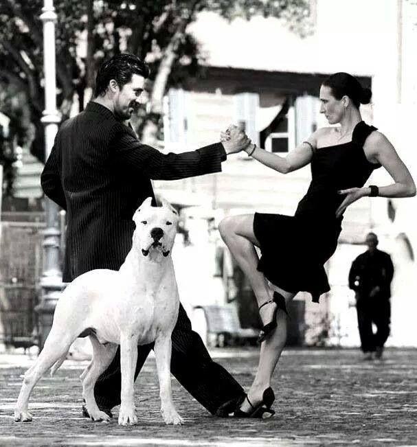 .^. Dogo Argentina   tango baby!!!